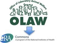 Title: OLAW logo pointing to eRA Commons logo
